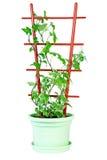 Hera verde imagem de stock royalty free