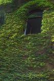 A hera verde cobriu a parede   imagens de stock