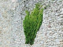 Hera verde em uma pedra velha foto de stock royalty free