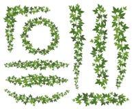Hera verde Folhas em ramos de suspensão das trepadeiras Grupo de escalada do vetor da planta da parede da decoração da hera da pa ilustração stock