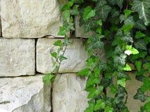 Hera verde na parede feita dos blocos de pedra brancos apropriado para o fundo ou o papel de parede alvenaria imagens de stock royalty free