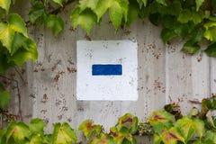 Hera verde no muro de cimento imagens de stock