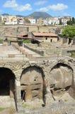 Heracleum and Vesuvius Stock Image