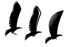 Heraldry eagle symbols and tattoo Royalty Free Stock Photo