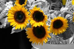Heralds of summer Stock Images