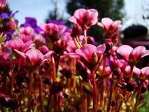 Heranwachsen als Blume Stockbilder