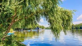 Herastrau Lake landscape Bucuresti Romania - willow  on the lake shore
