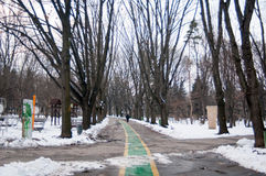 Herastrau park alley in winter Stock Photography