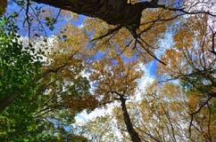 Herauf Bäume im Wald gerade schauen Stockfotos