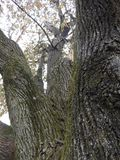 Herauf den Baum lizenzfreie stockfotos