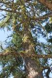 Herauf den moosigen Baum - Zusammenfassung Lizenzfreies Stockfoto