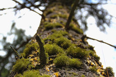 HERAUF einen moosigen Baum Stockfotos