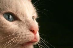 Herauf nahe Ansicht des Katze-Gesichtes Lizenzfreie Stockbilder