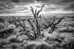 Herauf nahen Baum Lizenzfreie Stockfotografie