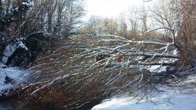 Herauf verwurzelten Baum unter dem Schnee stockbild