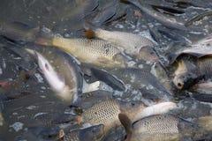 Heraus fischen Lizenzfreies Stockbild