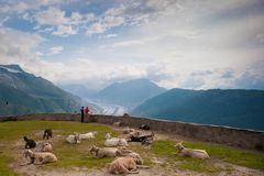 Heraus schauen über dem Aletsch-Gletscher Lizenzfreie Stockfotografie