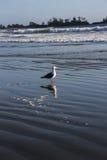 Heraus schauen zum Meer Stockfotografie