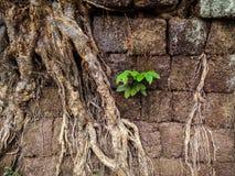 Herausgewachsene Ruinen des Bottichs Phou Lizenzfreie Stockfotos