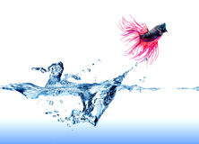 Herausspringen des Siamesischen Kampffisches des Wassers Lizenzfreie Stockfotos
