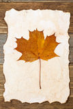 Herbário da folha de bordo Foto de Stock