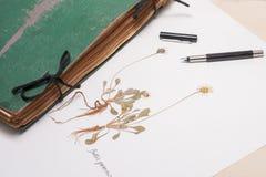 Herbários velhos e novos, coleção de espécimes secados da planta Fotografia de Stock Royalty Free