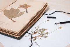 Herbários velhos e novos, coleção de espécimes secados da planta Imagens de Stock Royalty Free