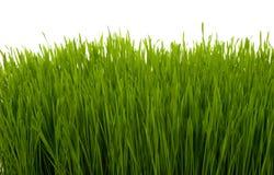 Herb Royalty Free Stock Image