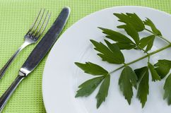 Herb 2. Green herb on the plate Royalty Free Stock Photo