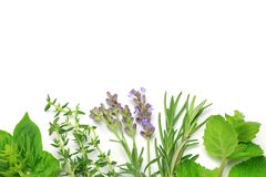 Herb. I display various herb and Royalty Free Stock Image