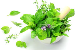 Herb Stock Photography