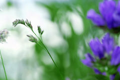 Herb. Blurred colors of flowers in a meadow stock photo