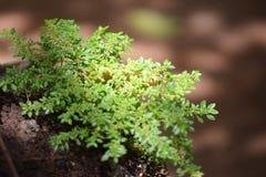 herb Imagem de Stock
