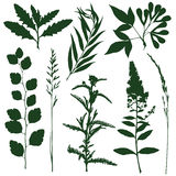 herb Imagem de Stock Royalty Free