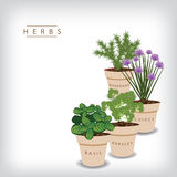 Herb background Royalty Free Stock Images