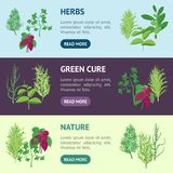 Herb Banner Horizontal Set Dill, persil, Basil, menthe, Rosemary, laurier et thym Vecteur Images stock