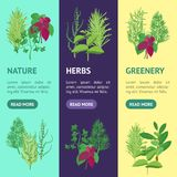Herb Banner Vecrtical Set Vecteur Photos stock