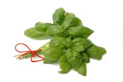 Herb Basil royalty free stock photo