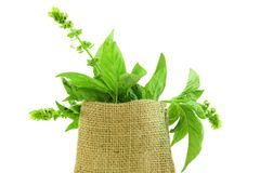 Herb basil in jute bag. Basil leaves herb in jute bag closeup royalty free stock photography