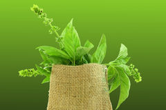 Herb basil in jute bag Royalty Free Stock Images