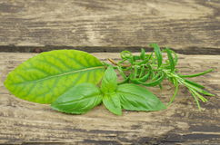 Herb basil rosemary and laurel Royalty Free Stock Images