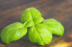 Herb basil Royalty Free Stock Photos