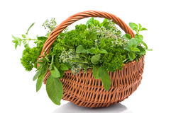 Herb Basket Royalty Free Stock Photos