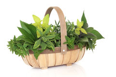 Herb Basket Stock Photo