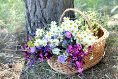 Herb basket. Basket with different kind of herbs, colorful and fresh bouquet Royalty Free Stock Photos