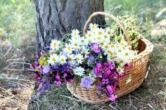 Herb basket Royalty Free Stock Photos