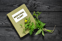 Herb Bennett (Geum urbanum) and directory medicinal plant Royalty Free Stock Photography