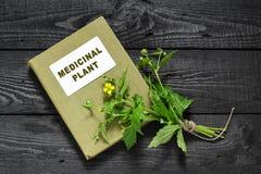 Herb Bennett (urbanum de Geum) et plante médicinale d'annuaire photographie stock libre de droits
