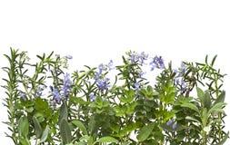 Herb Border stock photo