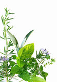 Herb Border. Border of fresh-picked herbs, including rosemary, mint, basil, oregano, thyme and parsley Royalty Free Stock Images
